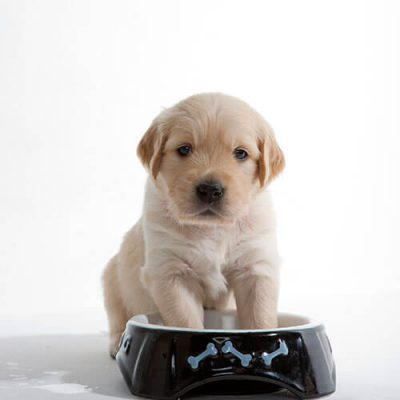 puppy with paws in food dish