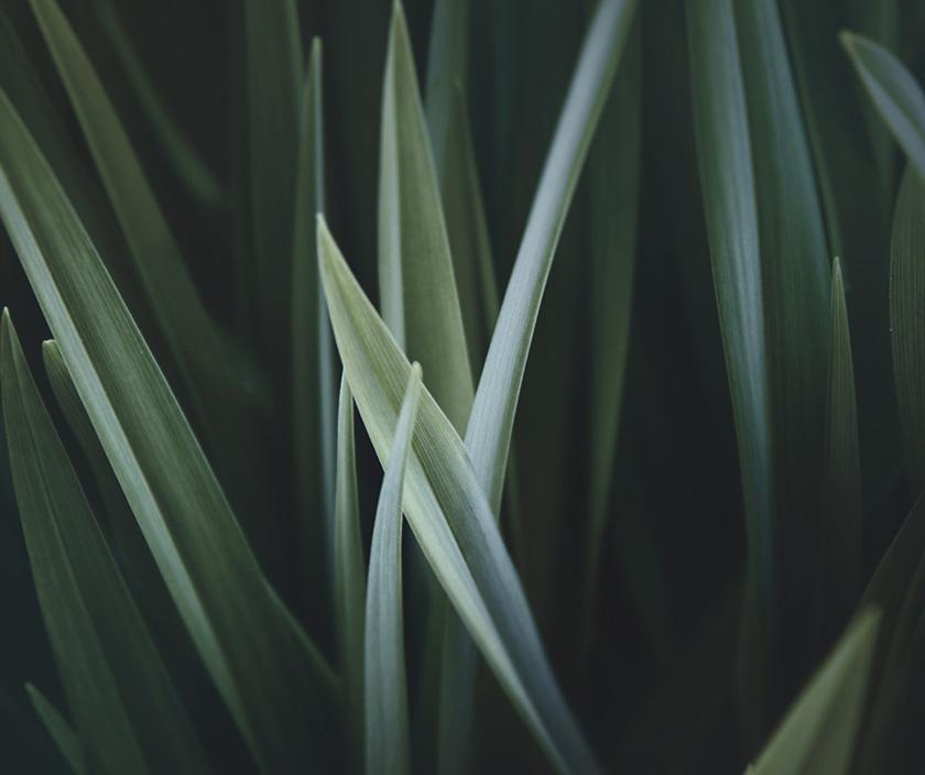 image of plants